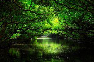 袖珍版亞馬遜河-台南四草大眾廟.綠色隧道生態之美